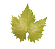 Green young grapes leaf. Isolated on a white background Stock Photo