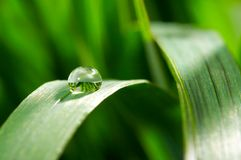 Green young grass with drops Royalty Free Stock Images