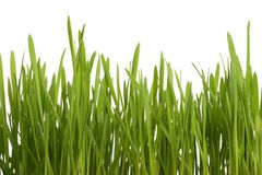 Green young grass with drops of morning dew Royalty Free Stock Photos