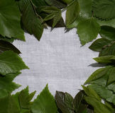 Green young leaves on white linen background. Place for the text. For design. Close-up. View from above. Stock Photography