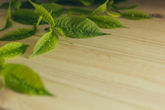 Green young leaves on a wooden  background. Dark wood background with copy space. Border. Royalty Free Stock Images
