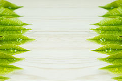 Green young leaves on a wooden beige background. Wood light background. Border. Top view. Stock Photos