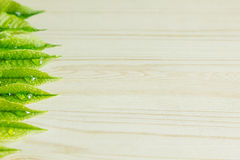Green young leaves on a wooden beige background. Wood light background. Border. Top view. Royalty Free Stock Image