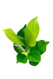 Green young plant Stock Photo