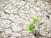 Green young plant on cracked dry land. Space for text and desig Royalty Free Stock Photography