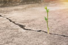 Green young plant growing on the ground.  Stock Photo