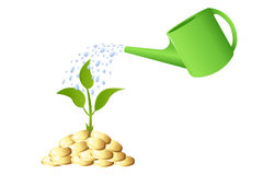 Green Young plant with money. Vector Stock Image