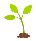 Green young plant Stock Image