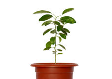 Green young plants in the pot. Stock Photos