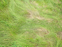 Green young soft long wrinkled grass Stock Photo