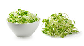 Green young sunflower sprouts on white background Stock Photo