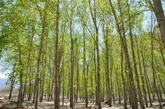 Green Young Trees Stock Photos