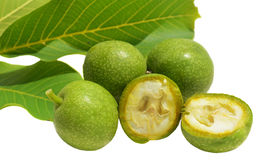 Green young walnuts in husks Royalty Free Stock Image