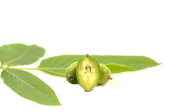 Green young walnuts in husks with walnut leaves on white background Stock Photography