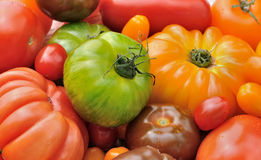 Green zebra with other tomatoes Royalty Free Stock Images
