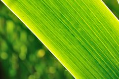 Green zen natural background Royalty Free Stock Image