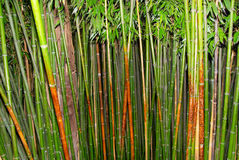 Green zen bamboo. Royalty Free Stock Photography