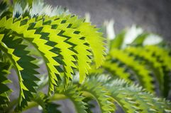 The green zigzag. Zigzag pattern on a green plant leaf stock photos