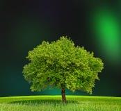 Green zone Stock Image