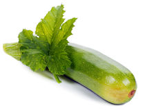 Green zucchini with leaf Stock Images