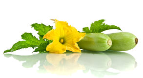 Green zucchini leaves and its flower Stock Photo