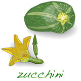 Green zucchini vector Royalty Free Stock Image