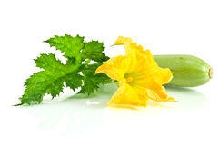Free Green Zucchini With A Flower Royalty Free Stock Image - 23280866