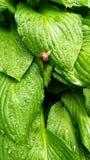 Greenary immagini stock