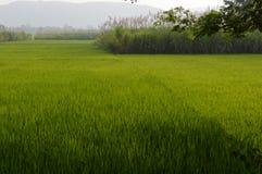 Greenary in Karnataka Lizenzfreie Stockfotos