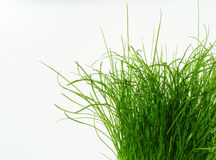 Always greener. Bright green grass isolated on white background Stock Photos