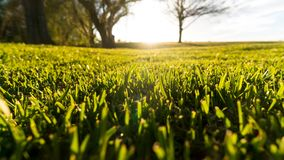 Greener On The Other Side. Field of green grass with sunshine flare and trees in background Stock Photo