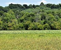 Greener pasture. An overlook of a green field out in the bottoms Royalty Free Stock Images