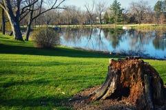 greenery пущи величает вал пня Стоковое Изображение