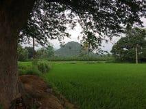 greenery foto de stock royalty free
