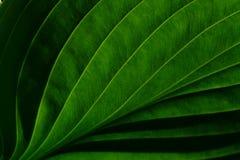 greenery стоковое фото