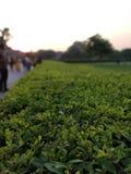 greenery fotos de stock royalty free