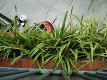 greenery fotografia de stock royalty free