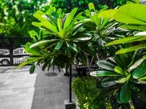 greenery foto de stock