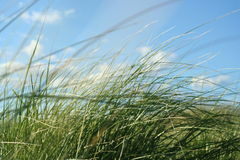 Greenery. A shot of the tall grass with the wind blowing through Stock Image