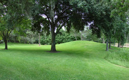 Greenery. A picture of a park, with some trees in a lush green field royalty free stock image