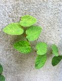 greenery Imagenes de archivo