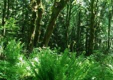 greenery foto de archivo libre de regalías