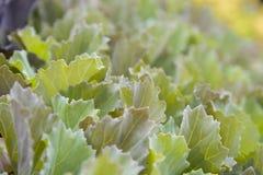 greenery Imagens de Stock