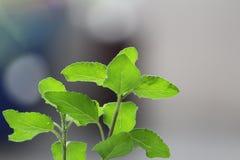 greenery Стоковые Изображения RF