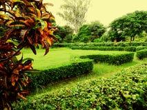 greenery Стоковые Фото