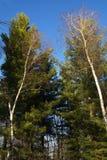 greenery Fotografia Stock Libera da Diritti