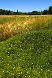 greenery Immagine Stock