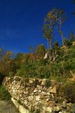 greenery Immagini Stock