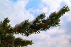 greenery Стоковая Фотография