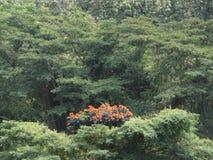 greenery Fotos de archivo libres de regalías